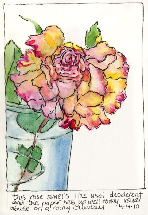 First Rose, ink & watercolor
