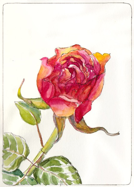 Second Rose, Just Picked, ink & watercolor