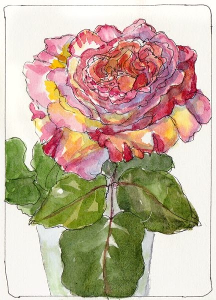 Second Rose, Opened, ink & watercolor