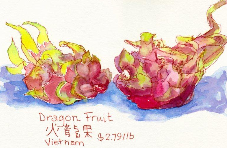 Dragon Fruit, ink & watercolor
