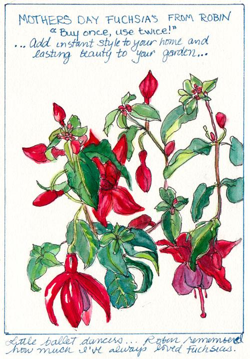 Mothers Day Fuchsias, ink & watercolor