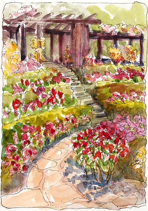 Berkeley Rose Garden, Ink & Watercolor