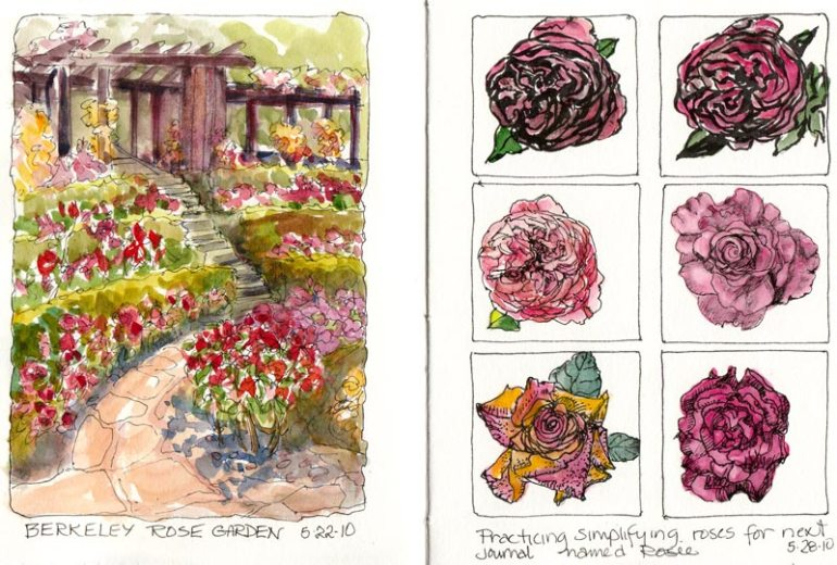 Berkeley Rose Garden & Rose Practice, Ink & Watercolor