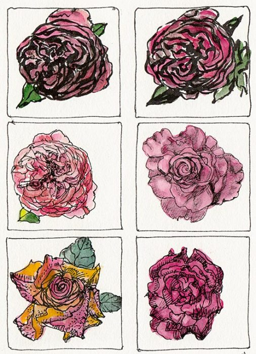 Rose Grid, Ink & Watercolor