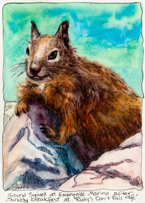 Emeryville Marina Ground Squirrel, ink & watercolor