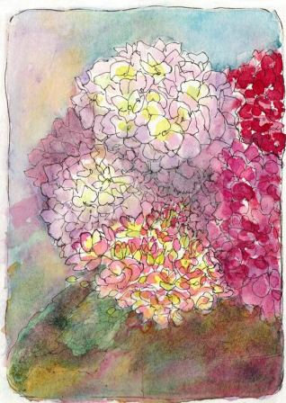 Hydrangeas Attempt #1, ink & watercolor
