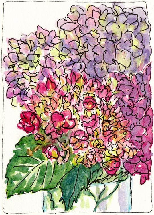 Hydrangeas; Attempt #2, ink & watercolor