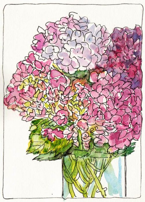 Hydrangeas Attempt #3, ink & watercolor