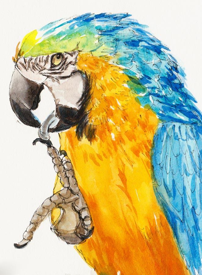Birthday Parrot, ink & watercolor