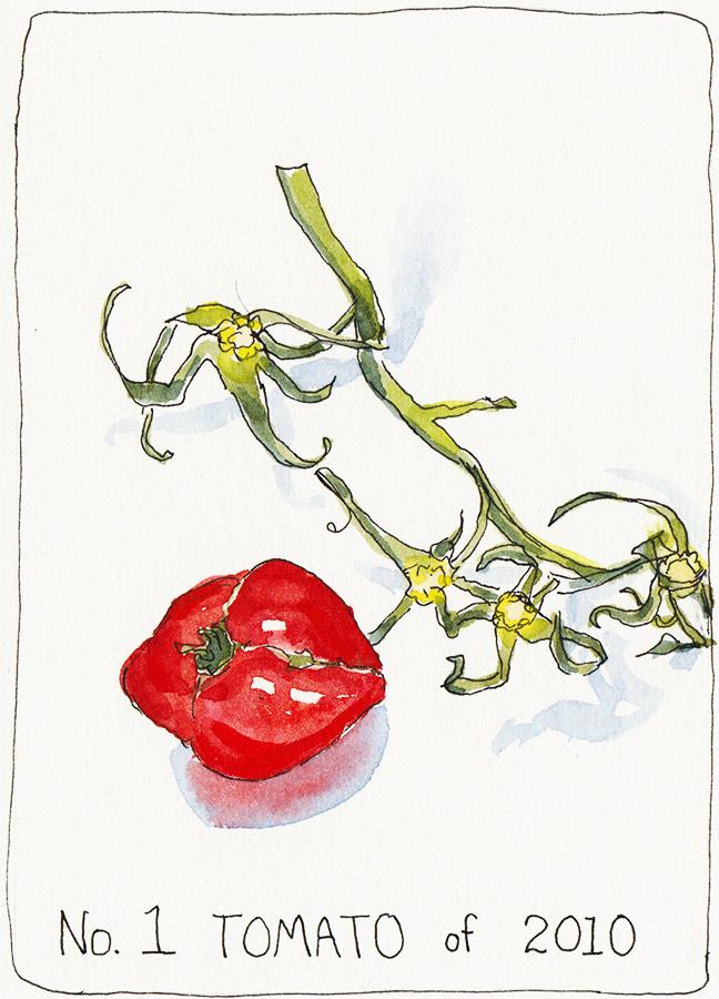 No. 1 Tomato, ink & watercolor