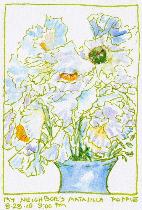 Matalija Poppy Sketch, green ink & watercolor