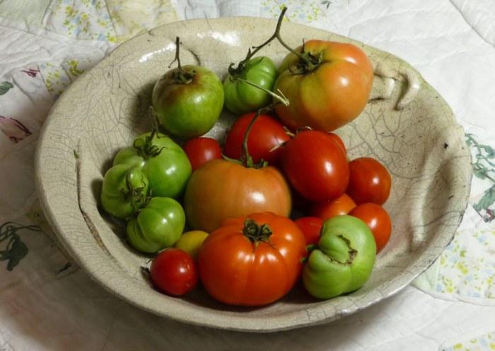 November Tomatoes Photo