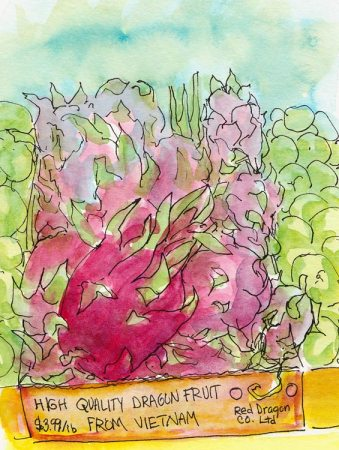 Dragon fruit, ink & watercolor