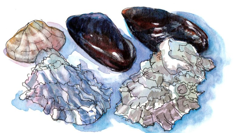 Shellfish Shells, ink & watercolor, 5x8""