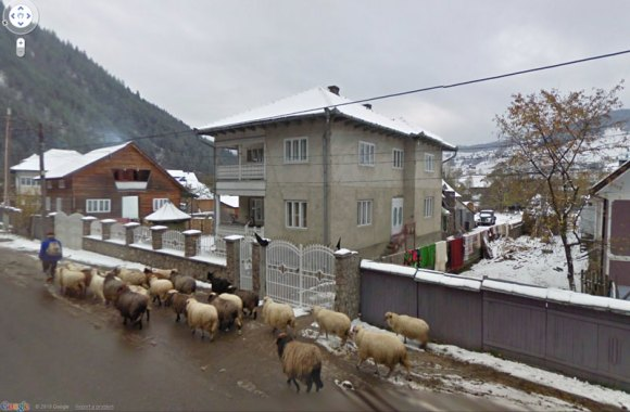 Romanian Shepherd and Sheep