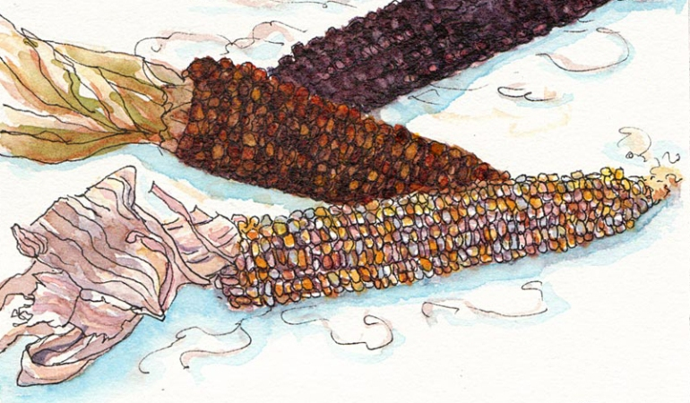 Indian Corn, ink & watercolor