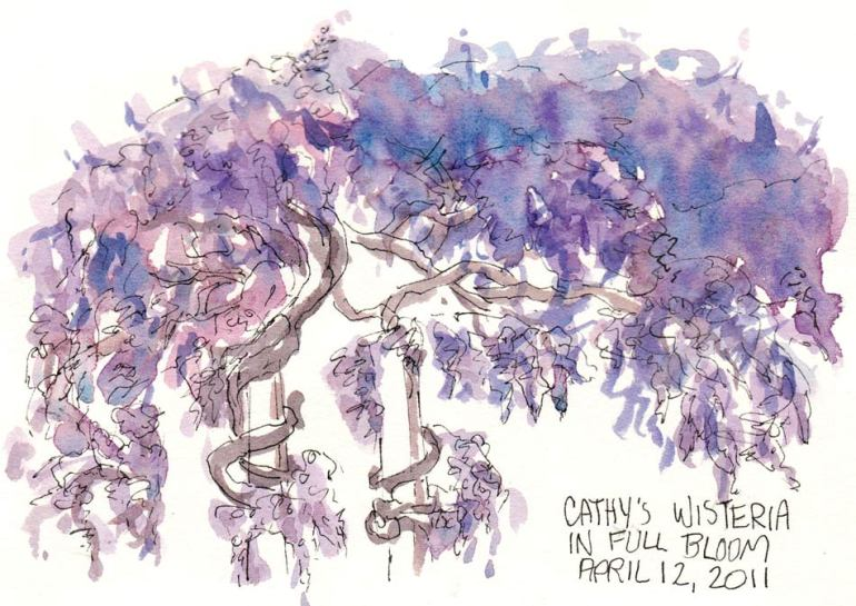 Cathy's Wisteria, ink & watercolor