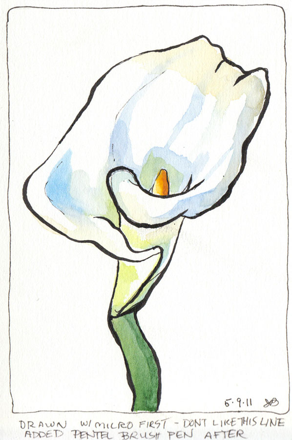 Calla Lilly 2, ink & watercolor