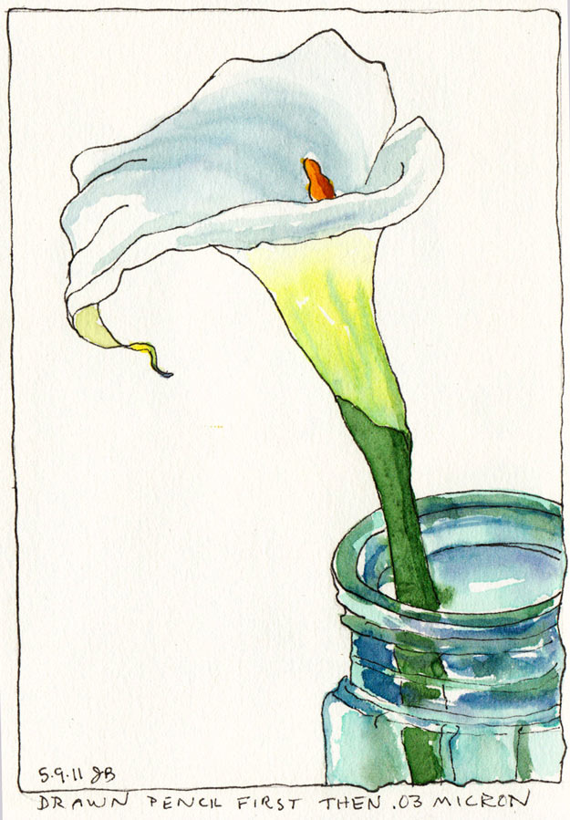 Calla Lilly 1, Ink and watercolor