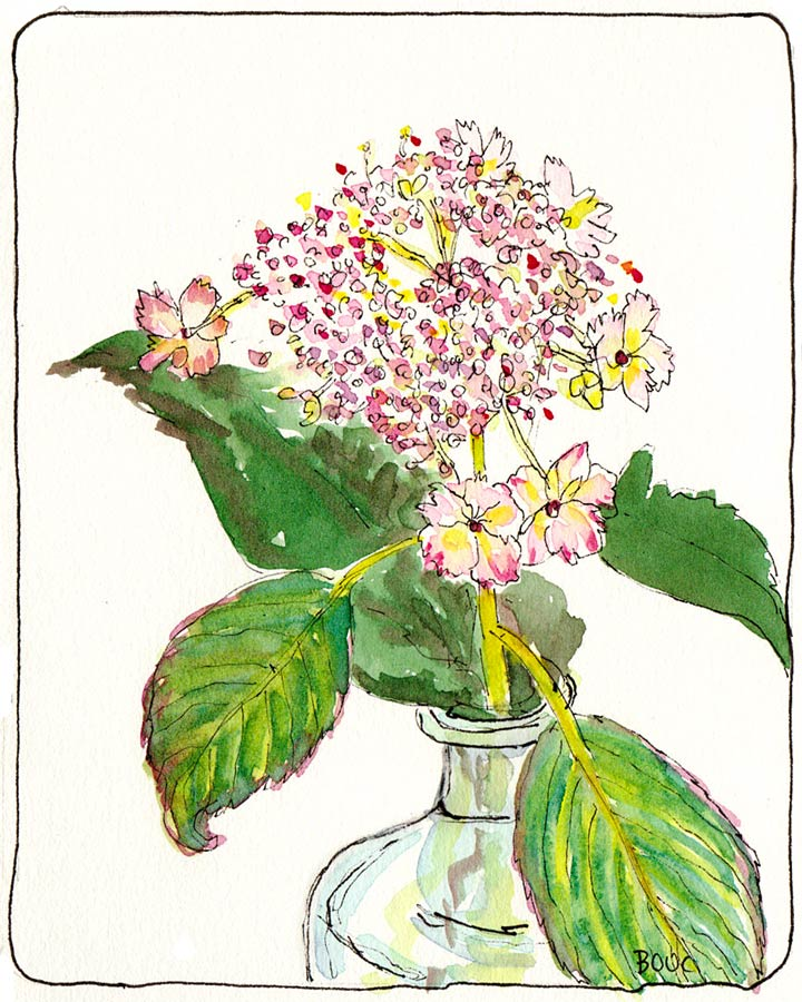 """Baby Hydrangea for """"Something Fresh"""" EDM #112, ink & Watercolor, 6x4.5"""""""