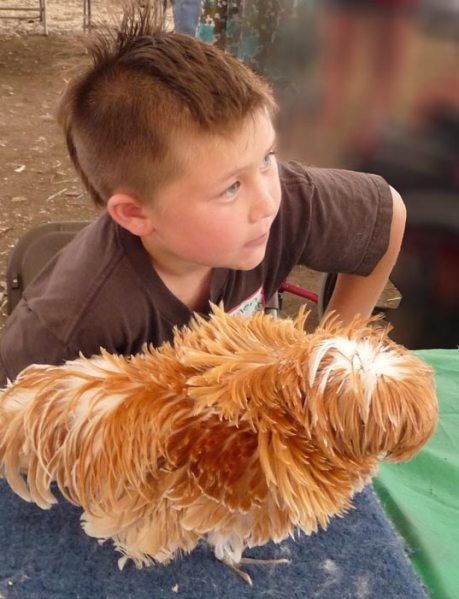 Boy with his chicken: matching hairstyles?