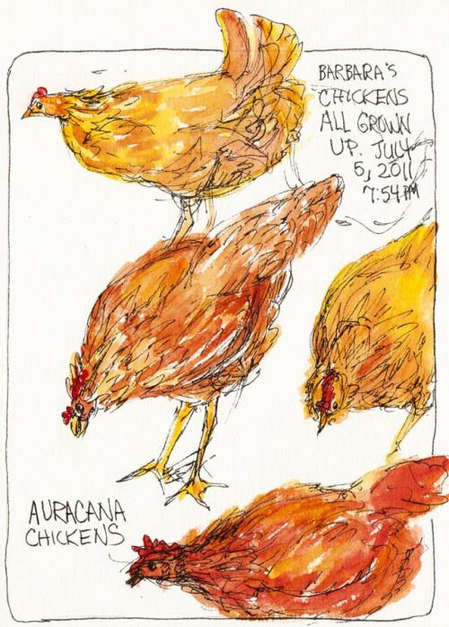 """Barbara's Chickens All Grown Up, ink & watercolor 7x5"""""""