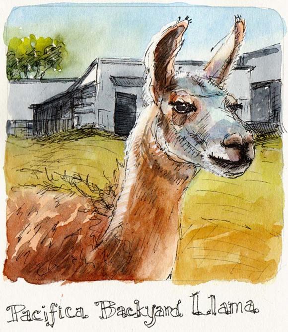 "Backyard Lama, ink & watercolor, 5x5"""