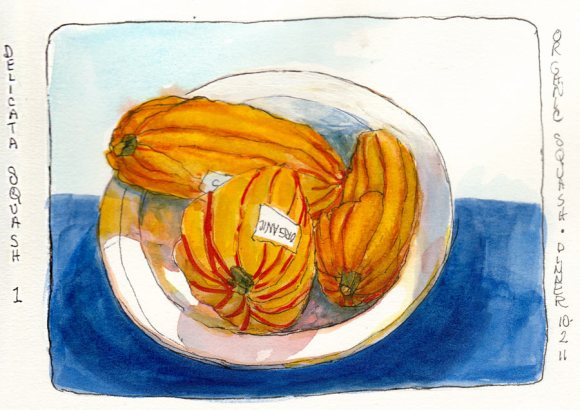 "Delicata Squash, ink & watercolor, 7x5"""