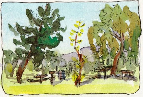 The little tree, from my car, sketch #1, ink & watercolor