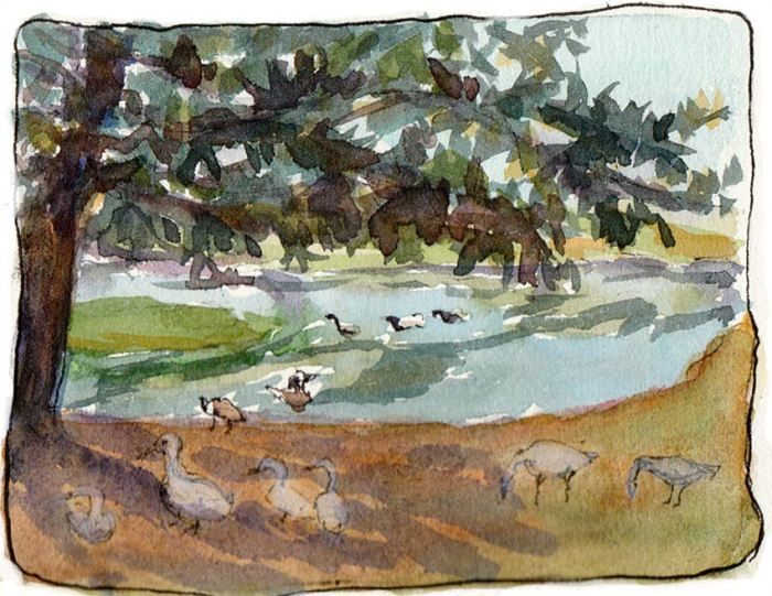 Lagoon view, geese in the shade