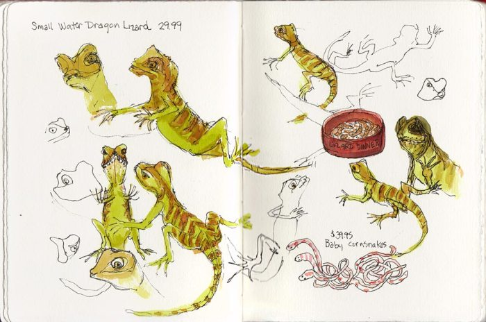 "Small Water Dragon Lizard, ink & watercolor, 10""x7"