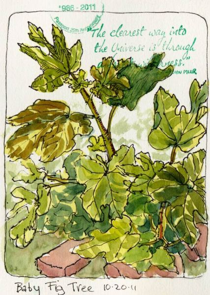 """Baby Fig Tree Growing Bigger, ink & watercolor & rubber stamp, 7x5"""""""
