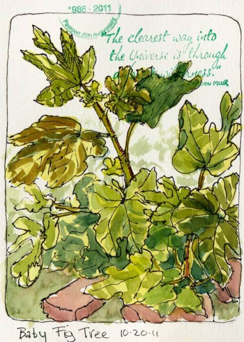 Baby Fig Tree Growing Bigger, ink & watercolor & rubber stamp, 7x5""