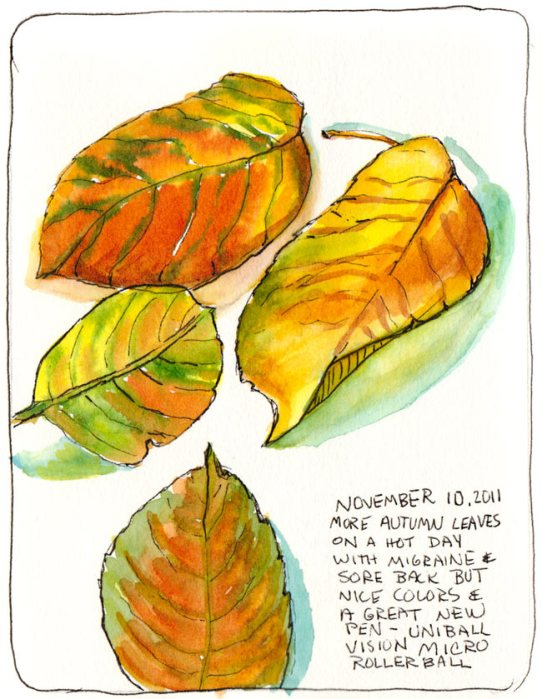 Autumn leaves just turning, ink & watercolor, 7x5""