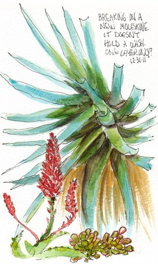 Succulents Along the Walk, ink & watercolor, 7x5""