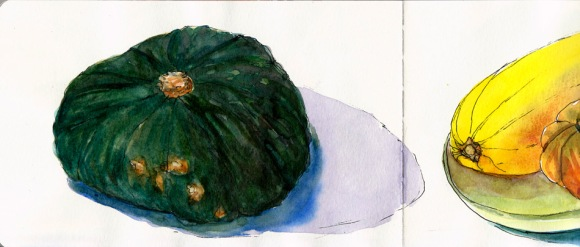 Sonia's Squash, ink & watercolor, 5x8""