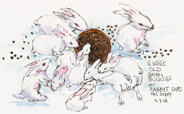 Baby Bunnies Chillin' & Chowin' Down, ink & watercolor, 5x8""
