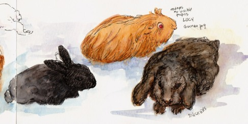 Bunnies & Guinea Pig, right side of spread