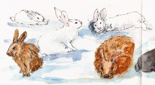 "More bunnies (left side of spread), ink & watercolor, 5x8"""
