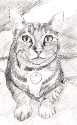 Lucy, pencil sketch on Mylar tracing paper, 12x9""