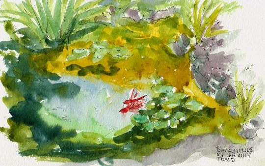 Bancroft Garden Lilly Pond and Dragonflies, ink & watercolor 5x8""