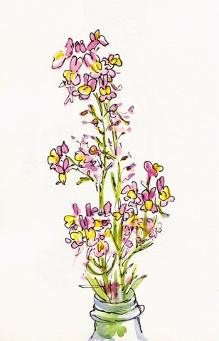 Pink & Yellow Wildflowers, ink and watercolor, 5x8""