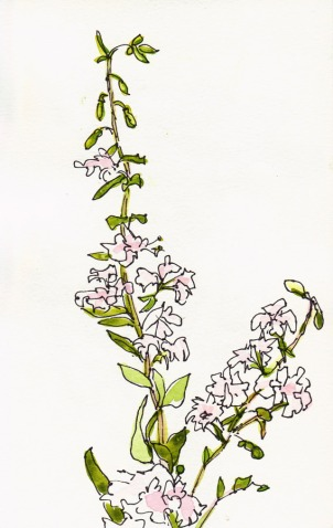 Gentle white blossomed wildflowers, ink & watercolor, 8x5""