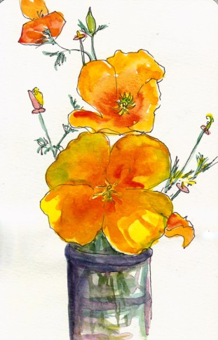 California Poppies, first attempt,  ink & watercolor 8x5""