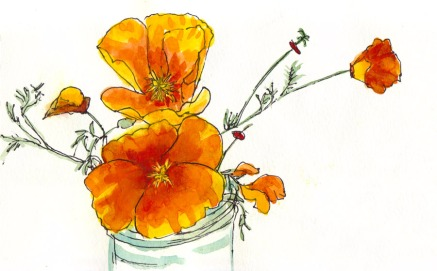 California Golden Poppies, ink & watercolor, 5x8""