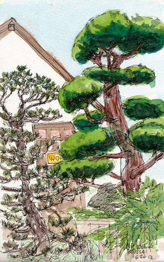 "Mr. Wong's Giant Bonsai, ink & watercolor sketch, 8x5"""