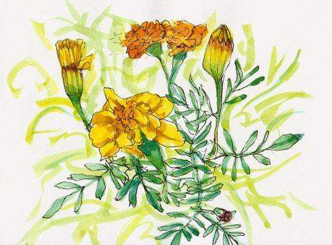 """Stillman & Birn Alpha 100 pound white Vellum Surface, ink & watercolor, 4x6"""""""