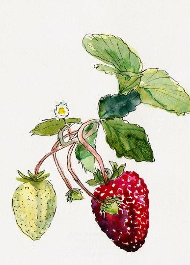 "Stillman & Birn Epsilon 100 lb white Plate Surface, ink & watercolor, 4x6"""