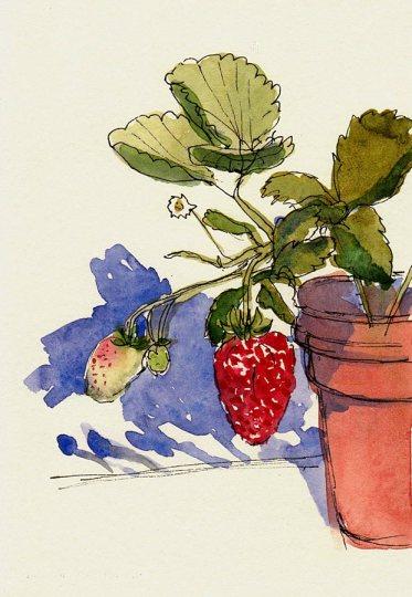"Stillman & Birn Delta 180 lb Ivory paper, ink & watercolor, 6x4"""