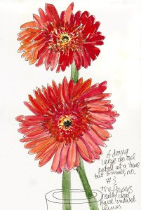 Gerbera Daisy, Attempt #3, ink & watercolor, 8x5""